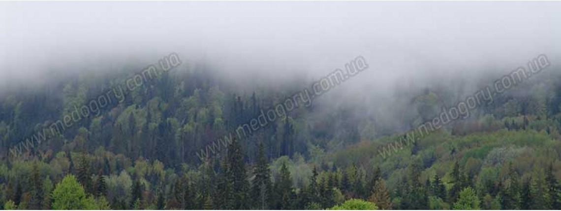 18.05.2016 р. Після снігопаду парує ліс на горах.